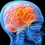 No dormir y deterioro cerebral